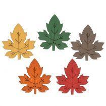Foliage, leaves & mushrooms
