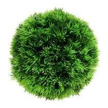 Ball shaped plants