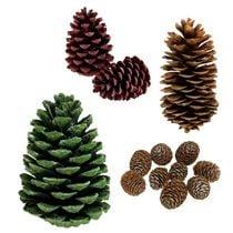Pine cones & cones