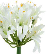 Agapanthus white 78cm 1p