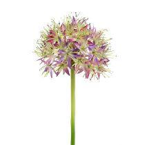 Allium light purple L76cm