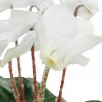 Cyclamen in cream 28cm