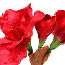 Amaryllis dark red 72.5cm