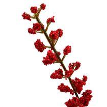Astilben bush red 52cm