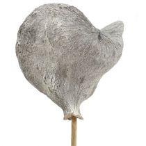 Badam on a stick whitewashed 12cm L55cm 23pcs