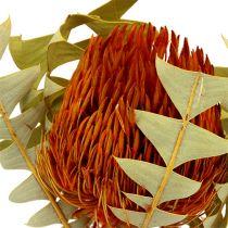 Banksia Baxterii Orange 8pcs
