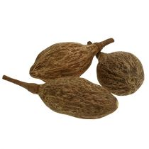Baobab fruit peeled 15cm - 20cm natural 5pcs