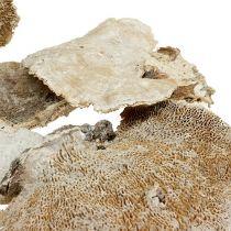 Tree sponge washed white 1kg