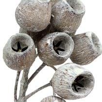 Bellgum twig 5-7 white washed 20pcs