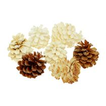 Mountain pine cones, small, bleached 3.5-5cm 1kg