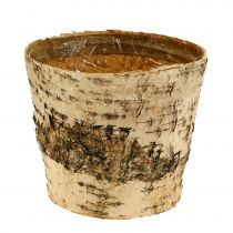 Birch pot Ø15cm H13cm