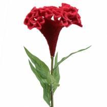 Celosia cristata cockscomb red 72cm