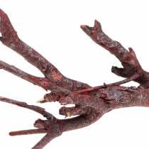 Dekoast curry bush red washed 500g