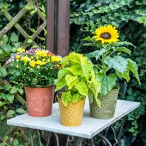 Decorative bucket fruits yellow, orange, green washed Ø15cm H14cm set of 3