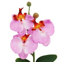 Decorative orchid in a pot pink H29cm