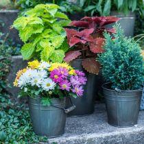 Decorative bucket with handle, garden decoration, plant pot, metal vessel Ø16.5cm H15cm