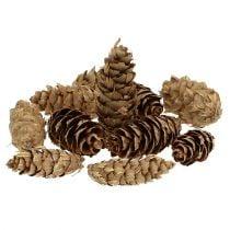 Douglas fir cones 10kg
