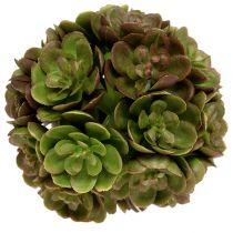 Echeveria ball 5cm green 4pcs