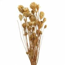 Dried flowers fennel natural 100g