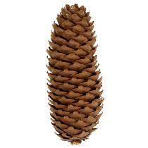 Spruce cones natural 5kg pine cones