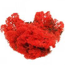 Decorative moss red reindeer moss for handicrafts 400g