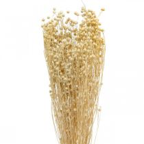 Flax bleached dry flora dry grass 100g