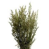 Natural oat bundle 1 bundle of decorative oats