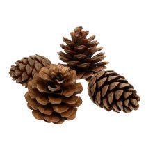 Halepensis cones natural 5kg