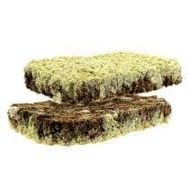 Moss reindeer moss Finnish Extra Polar 2 plates
