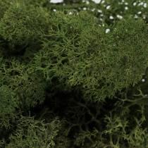 Moss reindeer moss green 400g