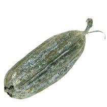 Luffa fruit green 14cm 10p