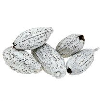 Cocoa pods washed white 15pcs