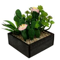 Cactus with flower 14cm in a wooden box