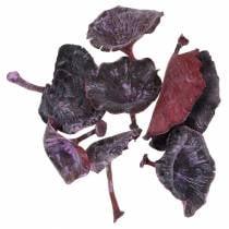 Kalix mushroom purple, white washed 100pcs