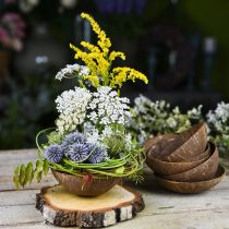 Coconut decoration bowl natural polished 6pcs
