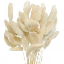Lagurus dried rabbit tail grass bleached 40-50cm 50pcs