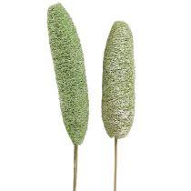 Luffa large on a stick green 25pcs