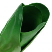 Decorative vegetable chard 25.5cm