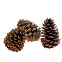 Maritima cones 10/14 natural 50pcs