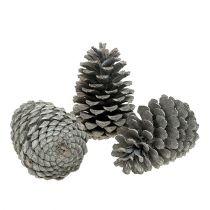 Maritima cones 10cm - 14cm white washed 25pcs
