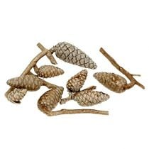 Maritime cones light brown, waxed 250g