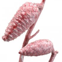 Maritime cones on branch pink / white waxed 400g