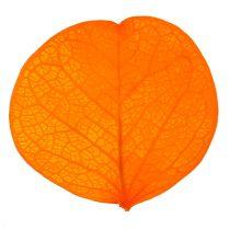 Moneta leaves apricot 50g