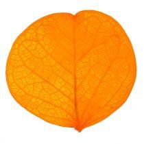 Moneta leaves golden yellow 50g