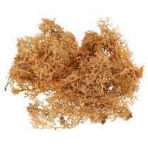 Decorative moss for handicrafts Orange colored natural moss preserved 40g