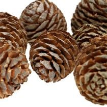 Murii cones natural 500g