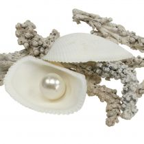 Shell mix with pearl and white wood 200g