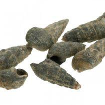 Natural items, natural snail shells 6–10mm, marine decorations 1kg