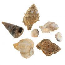 Shell assortment natural 500g