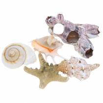 Shell mix natural assorted 5pcs